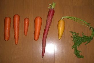 にんじん6種類.jpg