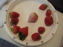 イチゴ食べ比べ.JPG